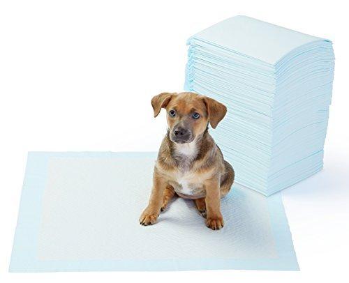 *AmazonBasics Pet Training and Puppy Pads, Regular – 100 Count