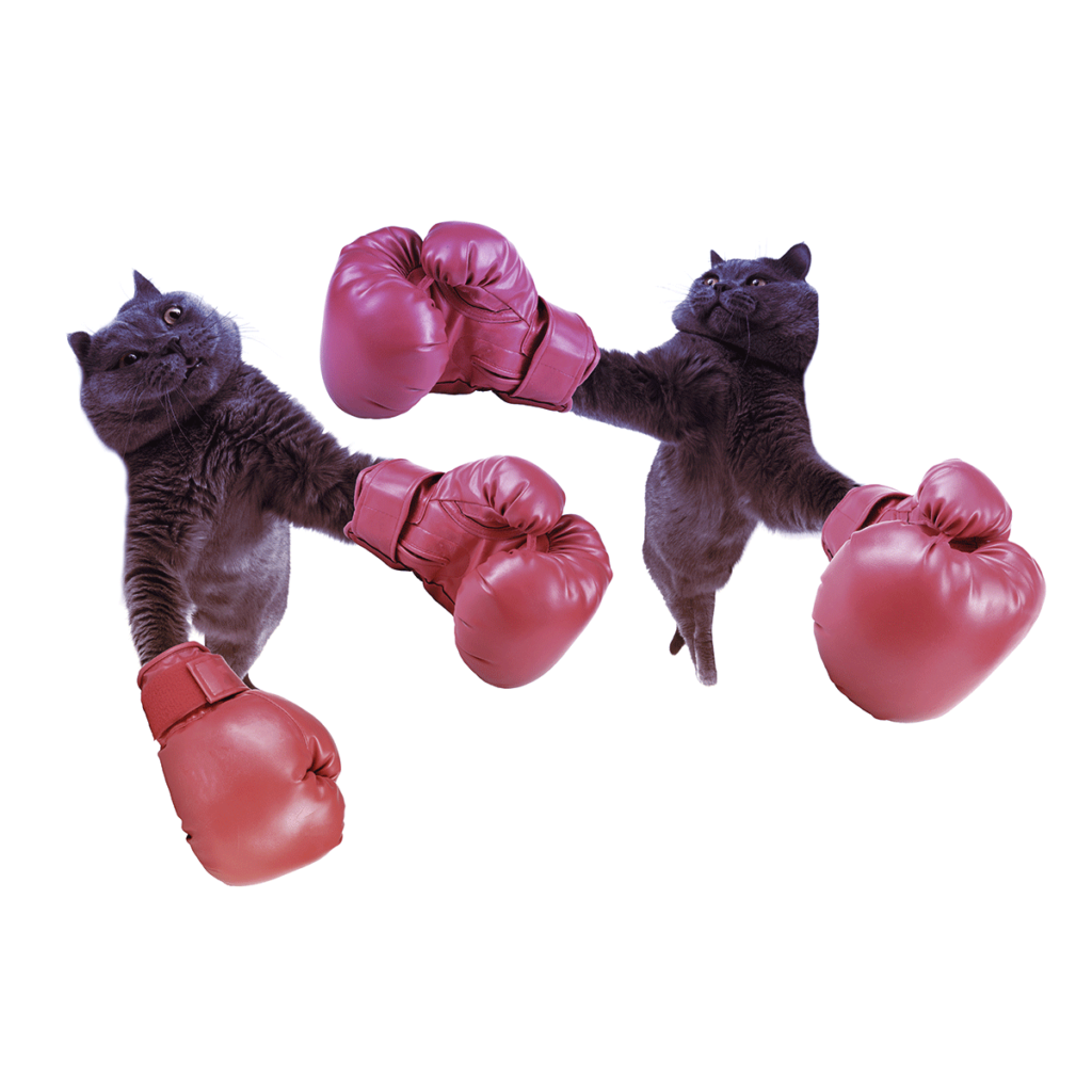 Two cats comically boxing with boxing gloves